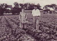1932 - Gemüseproduktion