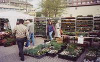 1995 - Schnittblumen, Pflanzen, Floristik u.v.m im Geschäft in Heidenau
