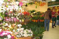 2007 - neues Blumengeschäft im real Heidenau bei Dresden