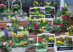 Blumen & mehr im real,- Heidenau Floristik- und Gartenmarkt