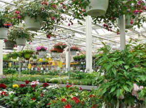pflanzenmarkt mit reichhaltigem angebot für haus, terrasse, garten