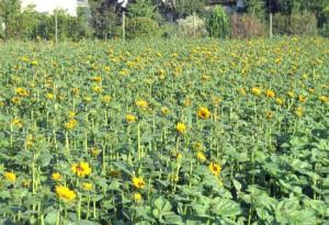gärtnerei pfitzner in dresden blumen und pflanzen auch aus eigener produktion