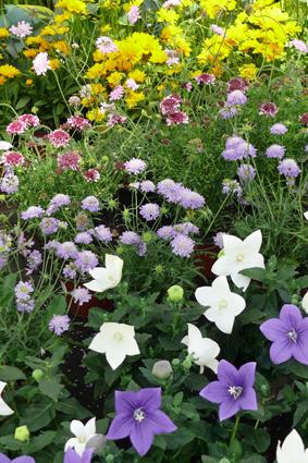 Blütenpracht im Gartenmarkt