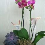 Dekorative Pflanzungen mit Orchideen