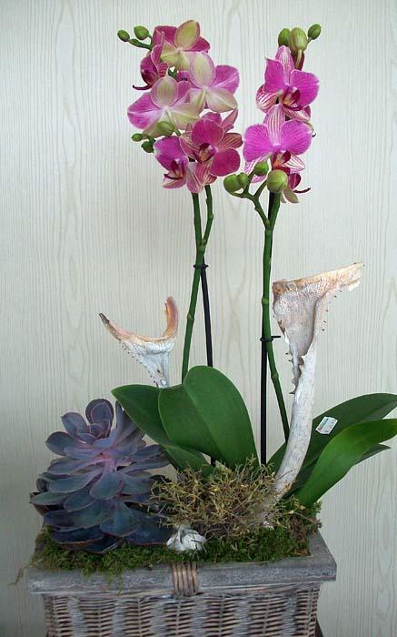 Dekorative Pflanzungen mit Orchideen  Gärtnerei Pfitzner ...