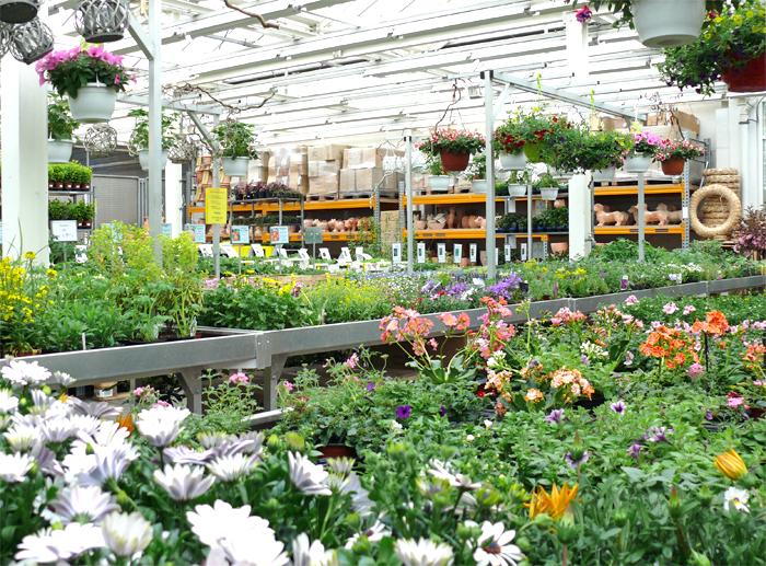 Pflanzenmarkt von A-Z
