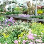 Üppiges Pflanzenangebot für jede Jahreszeit