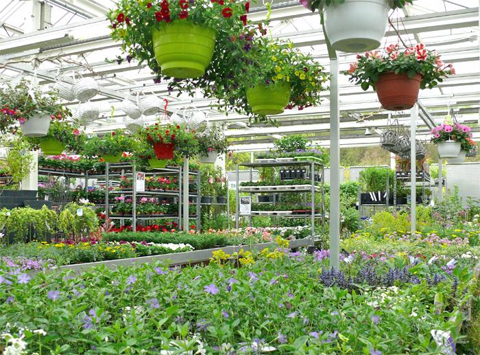 Pflanzenmarkt mit Sommerangebot