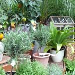 Topf- und Kübelpflanzen für Balkon und Terrasse